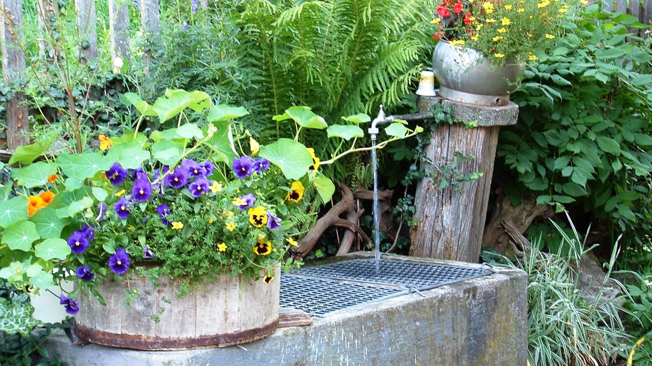 Blühende Blumen vor dem Brunnen